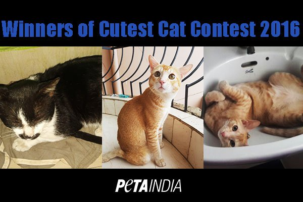 Cutest-cat-contest-winners-2016