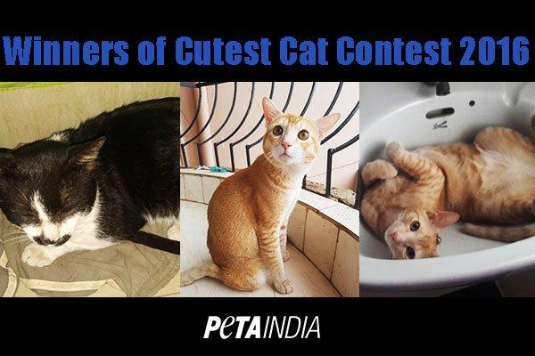 Cutest-cat-contest-winners-2016