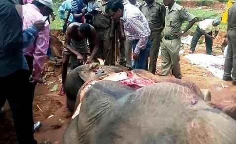elephant-shot-with-arrow