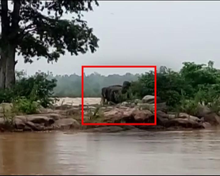 elephants in river Baitarani