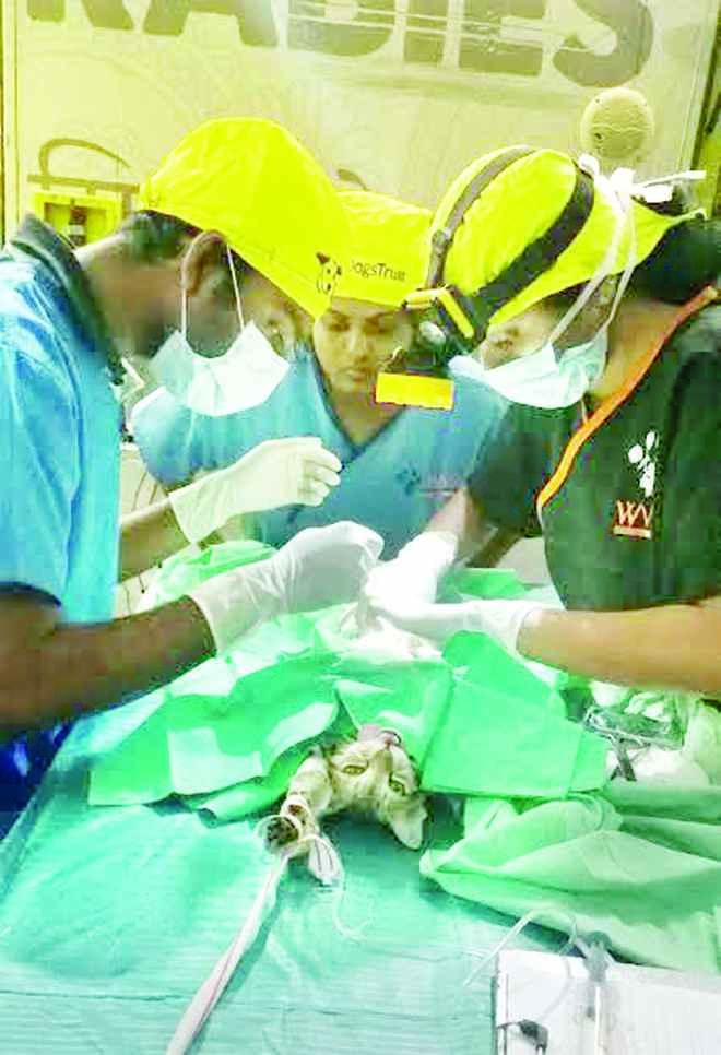 cat-sterilization