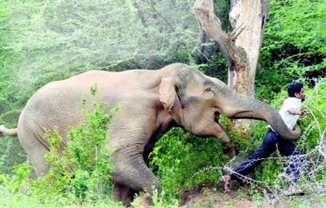 elephant-attack