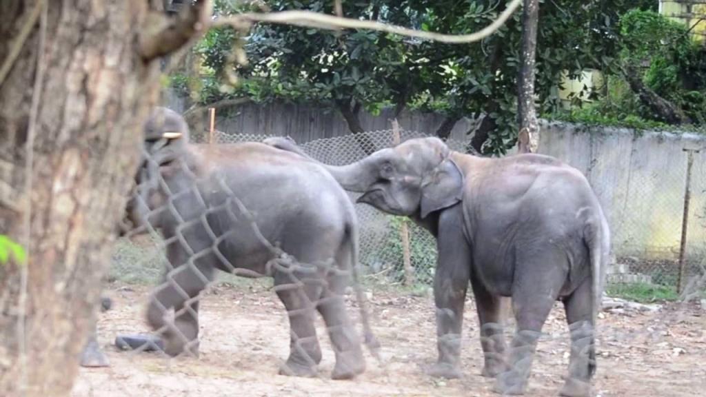 elephant-nandankanan