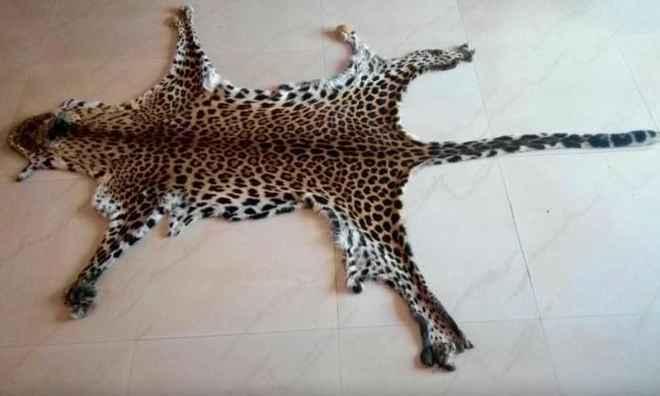 leopard-hide-seized