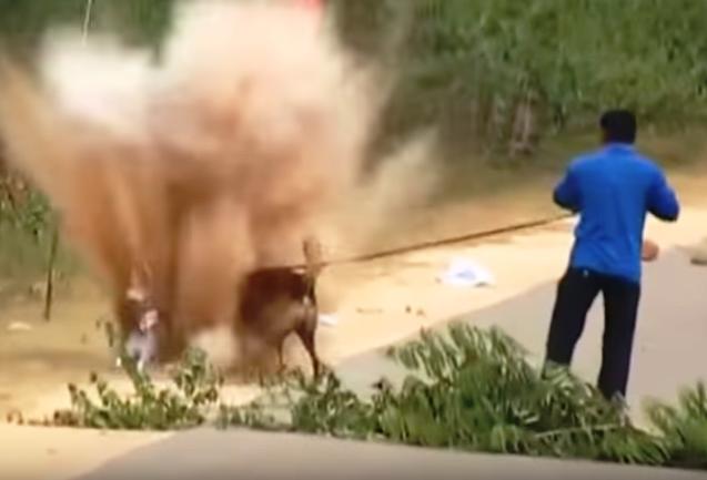 sniffer-dog-injured