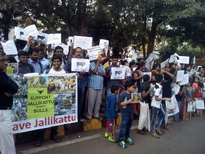 Jallikattu protest Bhubaneswar