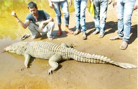 dead-crocodile