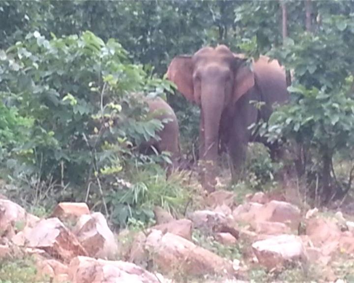 elephant herd 1