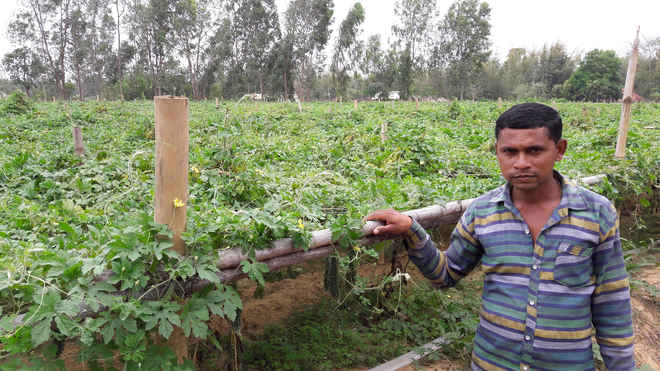 kalera farming