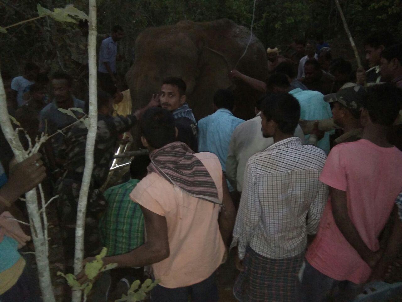 elephant tranqualise