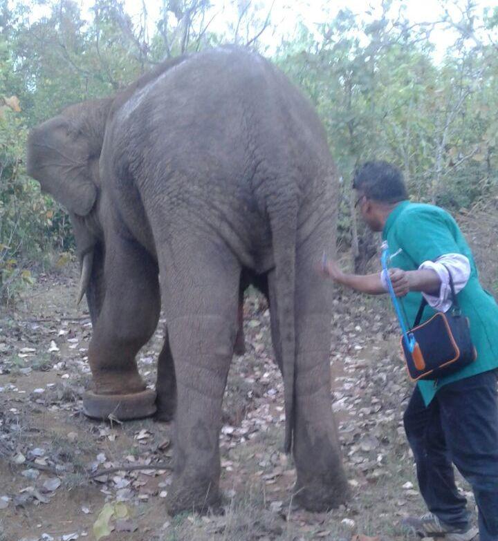 elephanty tyre