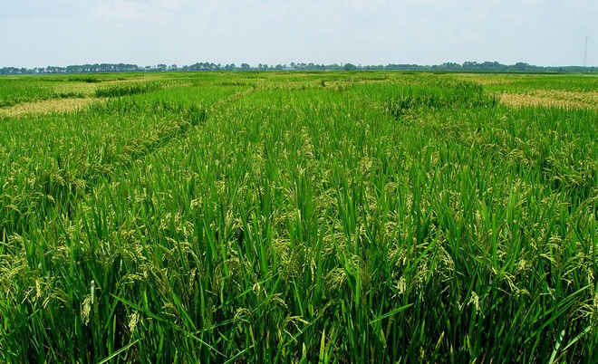 Odisha to cover 25 lakh farmers under PMFBY this kharif