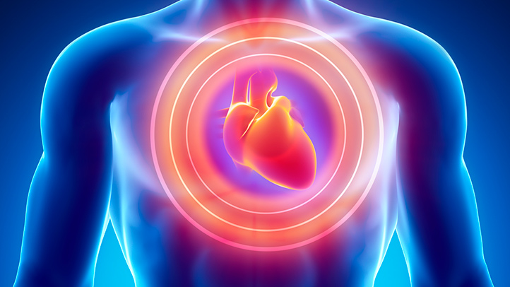Scientists develop cardiac muscle tissue made of spider silk ...