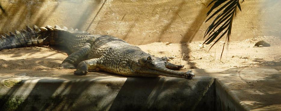 Baisipalli wildlife sanctuary-