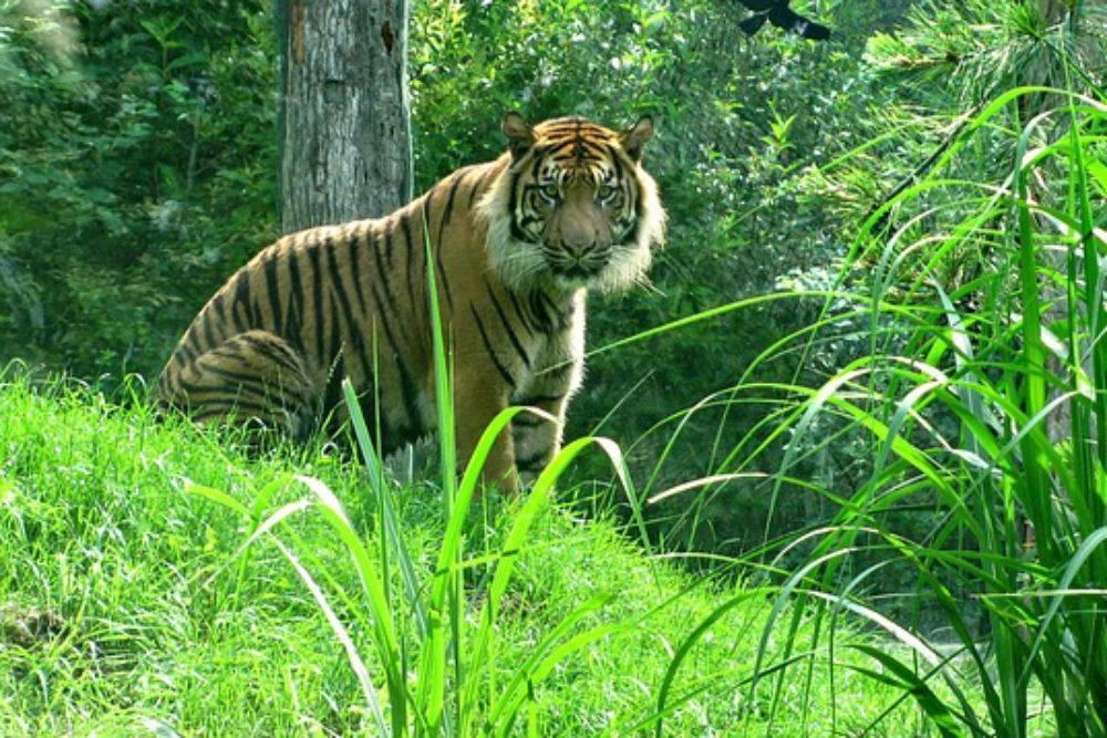 Hadgarh Wildlife Sanctuary-