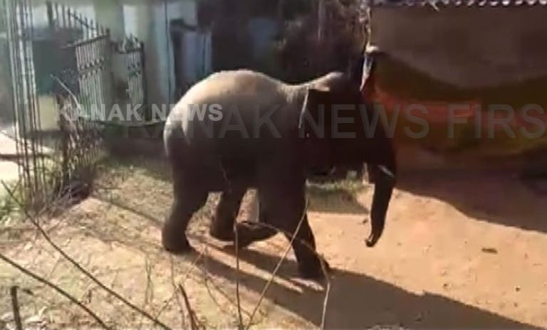 elephant in OUAT