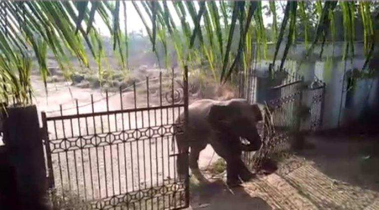 elephant-jayadev-vatika