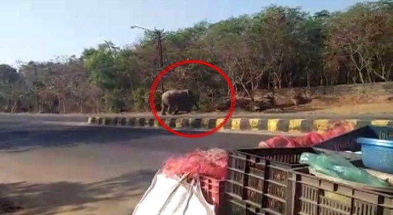 elephant-jayadev-vatika1