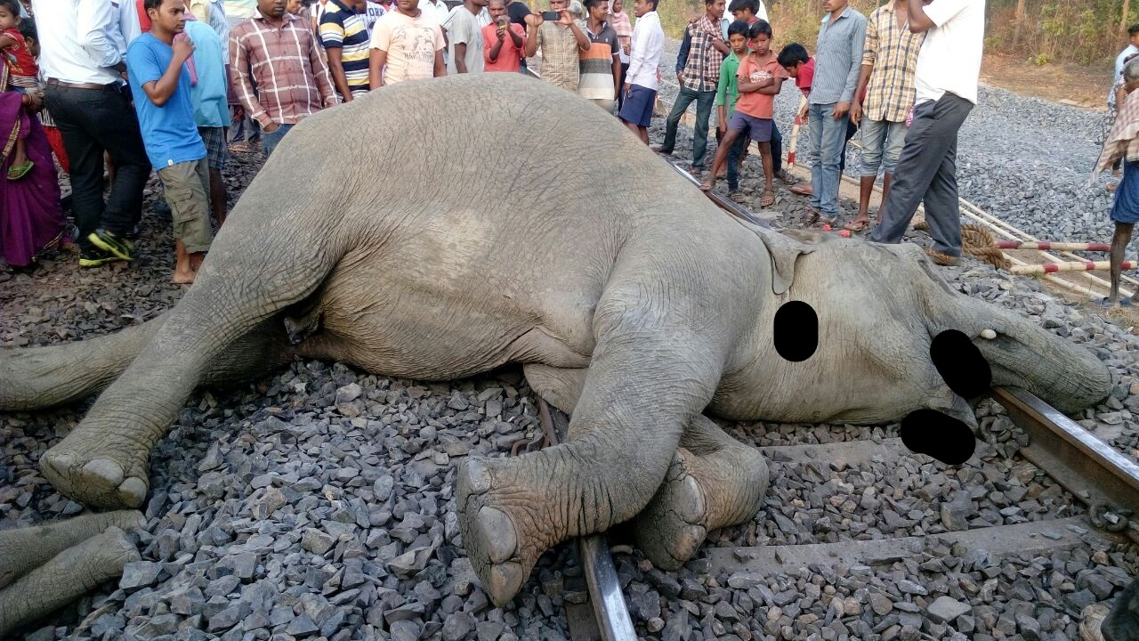 Run over by train, four elephants including a calf, die