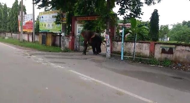 elephant inside hospital