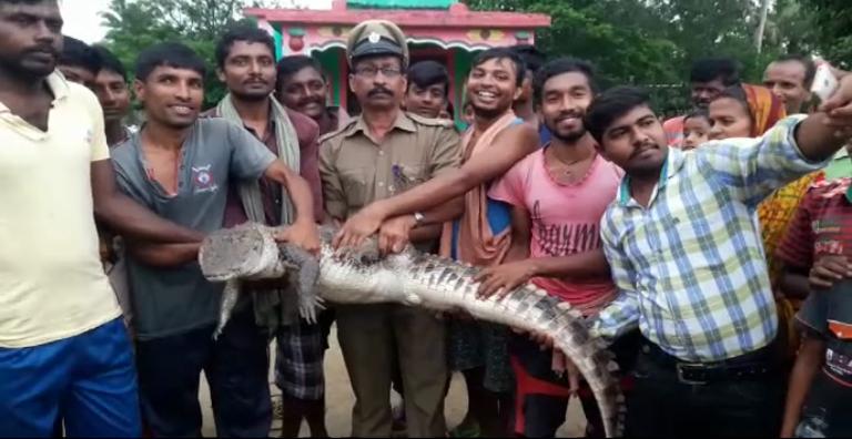 crocodile-rescue