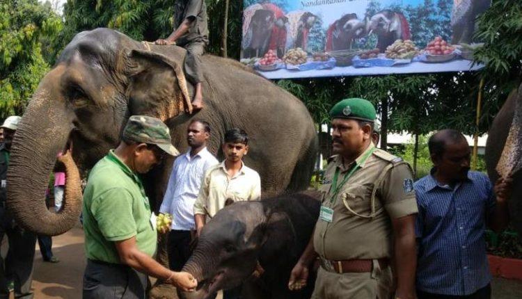 elephant-day nandankanan