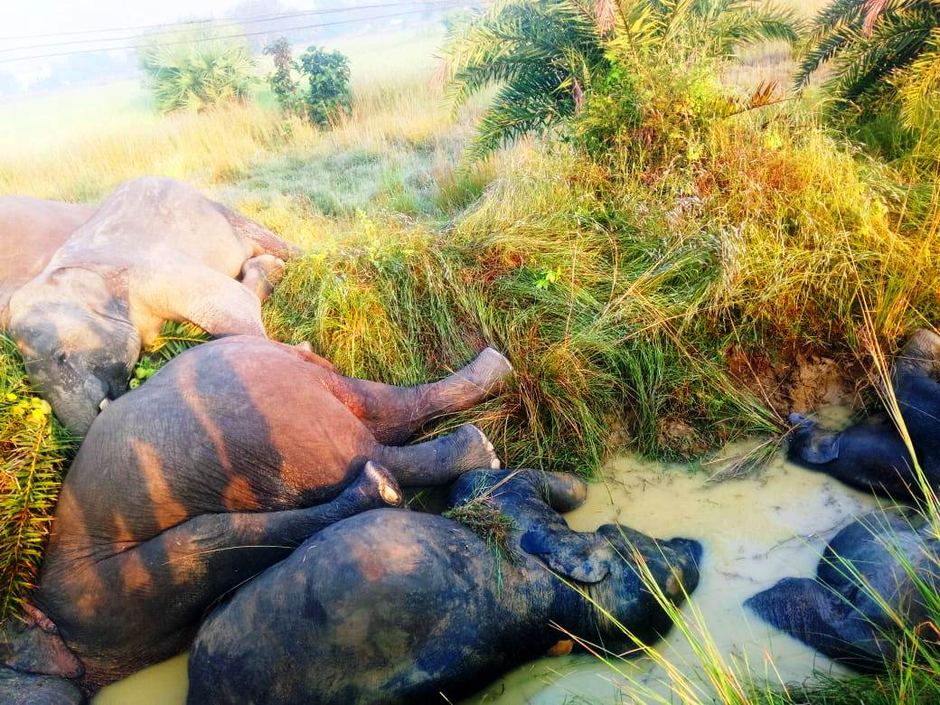Seven elephants electrocuted to death in Odisha