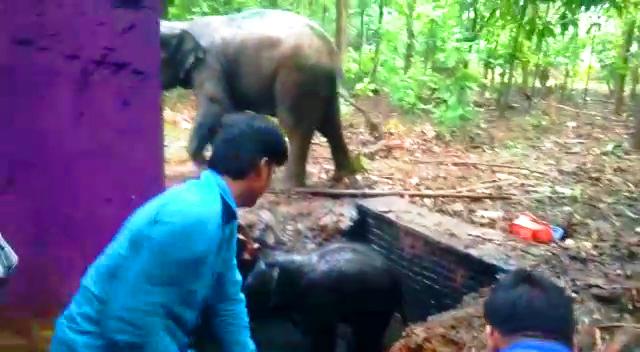 elephant falls into tank