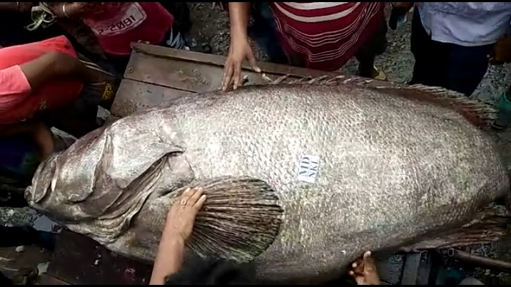 rare fish1