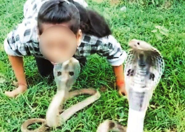 snake kissing video