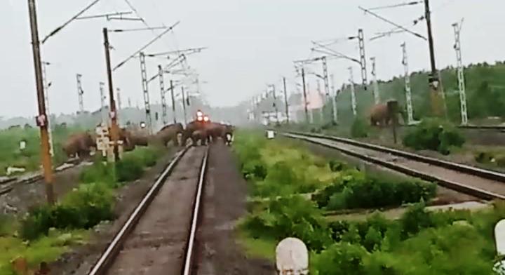 elephants on rail tracks