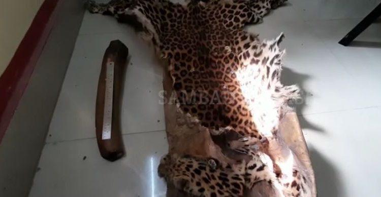 leopard skin (1)