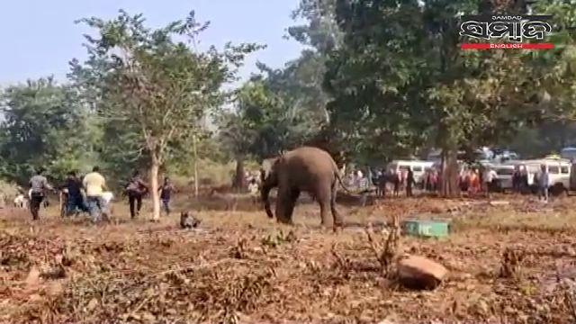 elephant_keonjhar