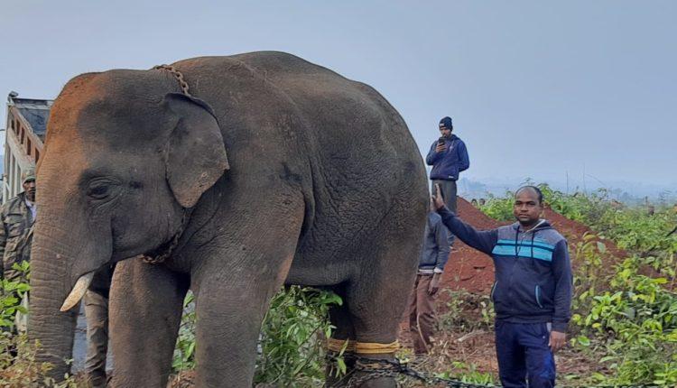 killer elephant