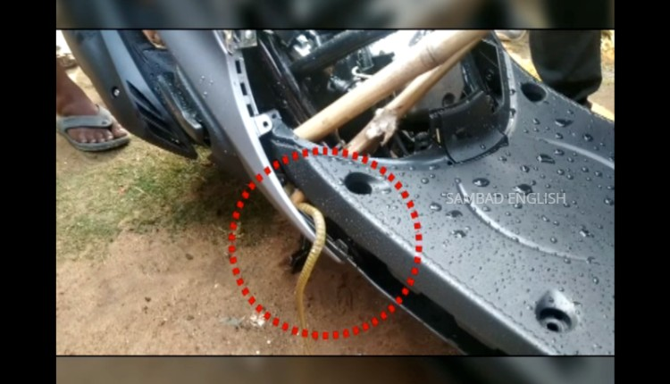 snake in scooter