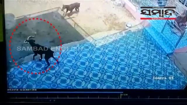 dog-cobra fight