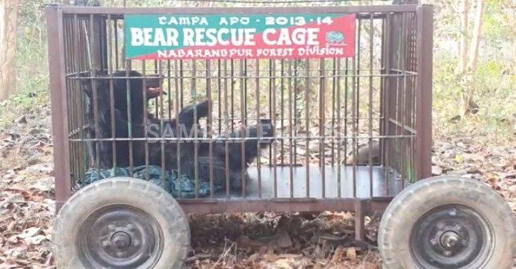 bear nabrangpur