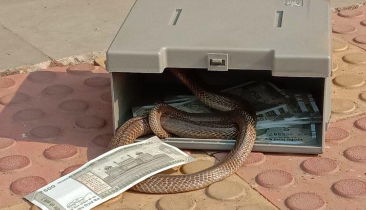 snake in atm