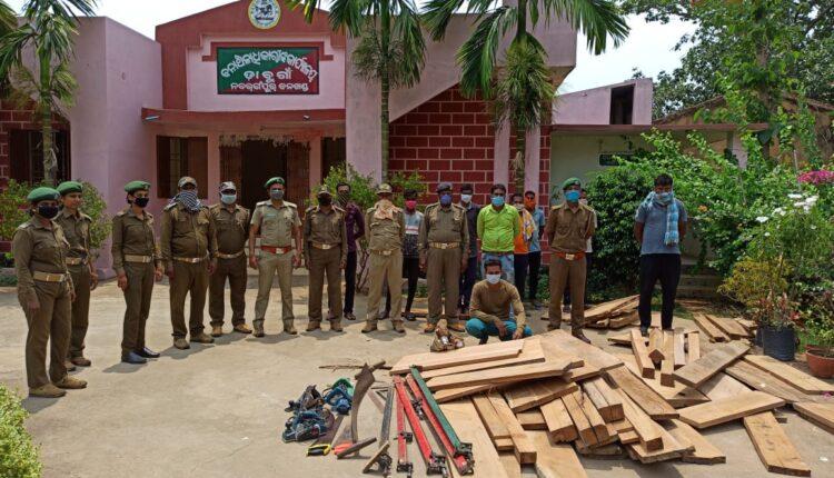 dabugaon_timber smuggler