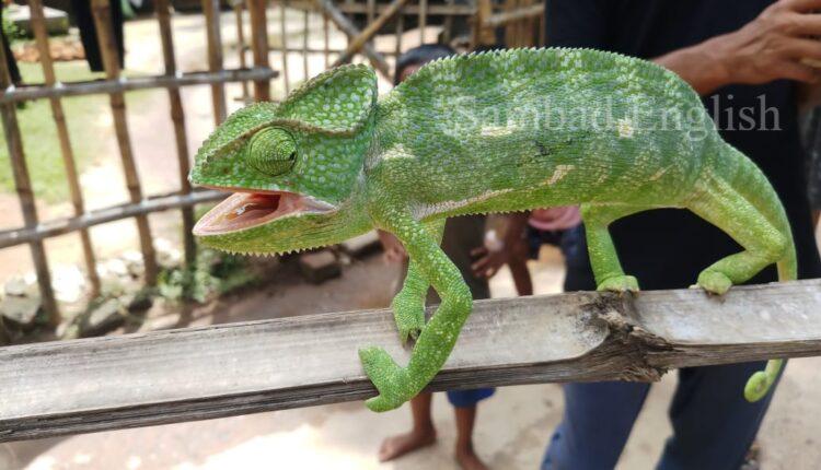 chameleon-ink