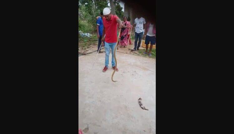 snake cat