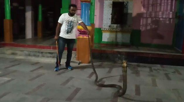 snake rescued