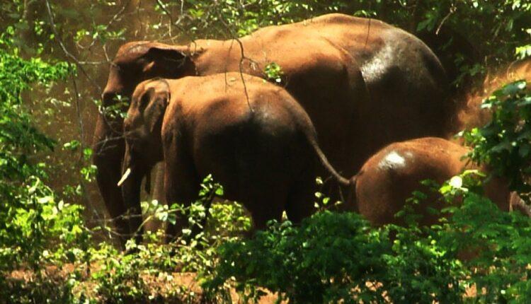 chandaka elephant reserve