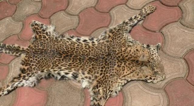 leopard skin1