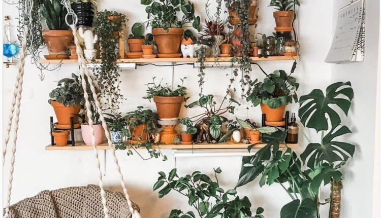 aesthetic indoor plants