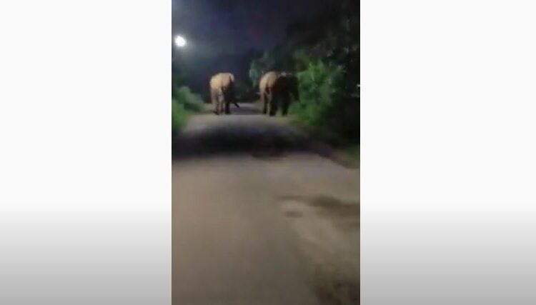 elephant at khordha hospital