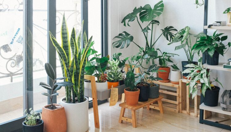 Indoor-plants-for-beginners