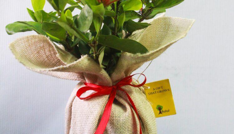 gift a plant bakul