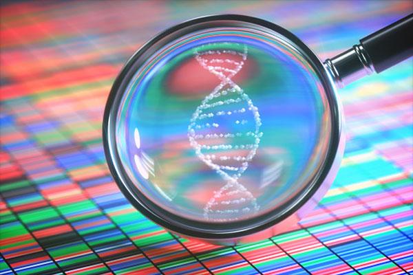 dna-fingerprints