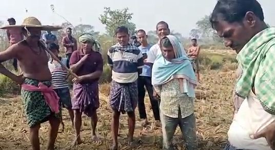elephanat kills farmer
